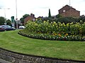 Sunflowers on Cumberland Street Roundabout - geograph.org.uk - 1478784.jpg