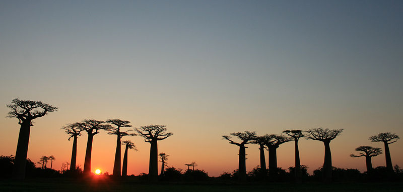 File:Sunset on the Avenue of the Baobabs.jpg