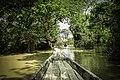 Swamp forest.jpg