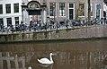 Swan in Amsterdam Canal.jpg