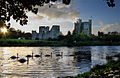 Swans at Trim Castle.jpg