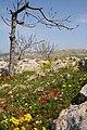 Syrian Countryside - Flickr - edbrambley.jpg