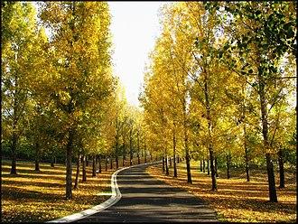Yarra Valley - Autumn in Tarra Warra Estate.