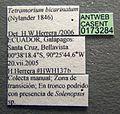 Tetramorium bicarinatum casent0173284 label 1.jpg