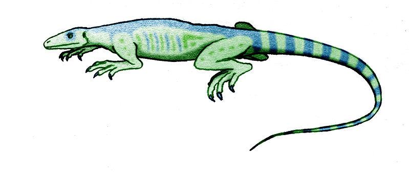 File:Thadeosaurus.jpg