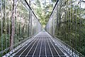 The 30m high structure of The Treetop Walk (19199320820).jpg