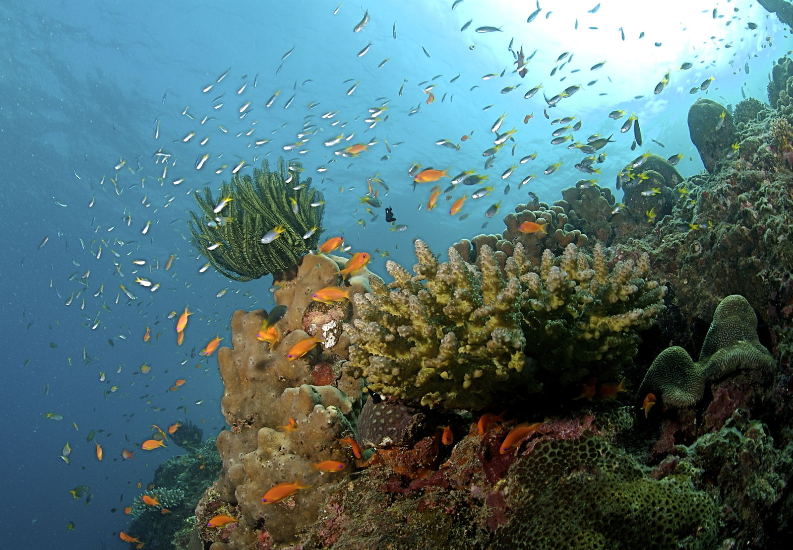 Coral Reefs in Andaman Island