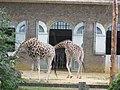 The Giraffe House at London Zoo - geograph.org.uk - 31895.jpg