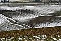 The Last Snow (250545317).jpeg