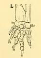 The Osteology of the Reptiles-193 uhyg hg kjh jhb jhgb hgv jhgv hgv uhyg hg jhg hgf uhgb t.png