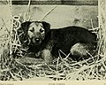 The encyclopaedia of the kennel - a complete manual of the dog, its varieties, physiology, breeding, training, exhibition and management, with articles on the designing of kennels (1913) (14764921301).jpg