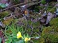 The gardener's friend - geograph.org.uk - 937182.jpg