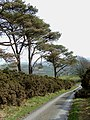 The lane to Llanycrwys, Carmarthenshire - geograph.org.uk - 1215338.jpg