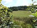 The wooded slopes of Yr Allt - geograph.org.uk - 520609.jpg