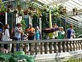 Titanenwurz Bot Garten München 2.jpg
