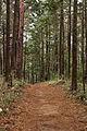 Tokai Nature Trail in Mt.Shiro 04.jpg