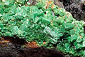 Torbernite, quartz 1100.1.FS2014 2.jpg