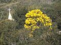 Torre da Igreja de Cachoeirinha - panoramio.jpg