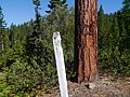 Township Range Section Marker on Forest Service Road.jpg