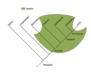 Paraphyly - Reptilia (green field) is a paraphyletic group comprising all amniotes (Amniota) except for two subgroups: Mammalia (mammals) and Aves (birds); therefore, Reptilia is not a clade. In contrast, Amniota itself is a clade, which is a monophyletic group.