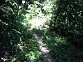 Trail - panoramio (11).jpg