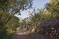 Trail in Vieussan 01.jpg