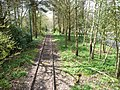 Tramway passing through woodland, Heaton Park (geograph 2916185).jpg