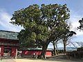Tree in Kitano Temman Shrine 20170203-2.jpg