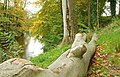 Tree trunk, Banbridge - geograph.org.uk - 1029768.jpg