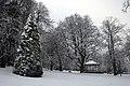 Trees (5277400107).jpg