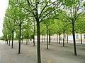 Trees at palace - Frederiksberg Have - Copenhagen - DSC08941.JPG