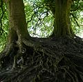 Trees near Avebury - panoramio.jpg