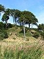 Trees on a ridge - geograph.org.uk - 1462775.jpg