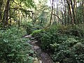 Tryon Creek State Natural Area 2017 07.jpg