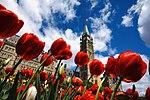 Tulip festival in Ottawa - 2019 (47925742658).jpg