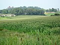 US-IN - Nisbet - North America - Corn - Road Trip - The South - Plantae (4892095880).jpg