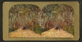 Under the live oaks of a Florida Highway, from Robert N. Dennis collection of stereoscopic views 3.png