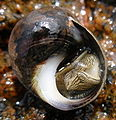 Underneath sea snail.jpg