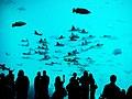 Underwater People - Flickr - Nrbelex.jpg