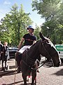 Unidentified polo player 2013 - 02.jpg
