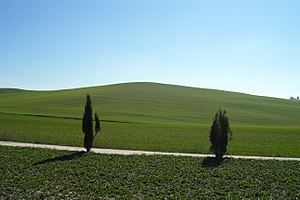 Hilly landscape in Val d'Orcia.