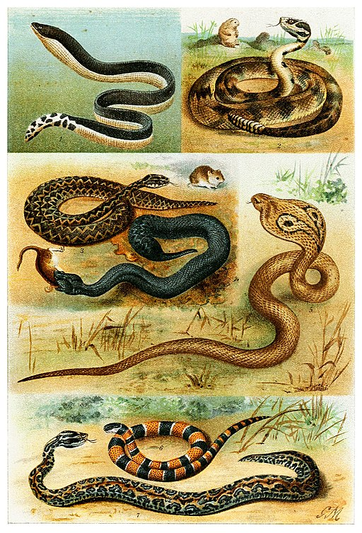 Various Serpentes