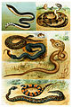 Various Serpentes.jpg
