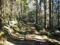 Veien til Stomnås - panoramio (8).jpg