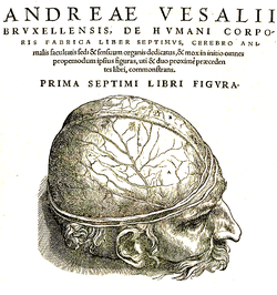 blödning mellan hjärnhinnorna