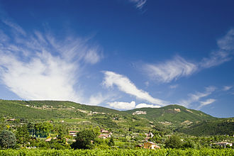 Valpolicella - Vineyards in the Valpolicella region