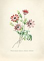 Vintage Flower illustration by Pierre-Joseph Redouté, digitally enhanced by rawpixel 14.jpg