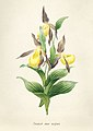 Vintage Flower illustration by Pierre-Joseph Redouté, digitally enhanced by rawpixel 49.jpg