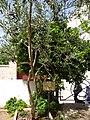 Visit a alberobello 2013 12.jpg