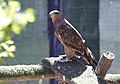 Visita al Centro de Recuperación de Animales Silvestres (CRAS) en su séptimo aniversario - 35971813530.jpg
